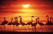 http://www.africa.org.ua/images/ke_5.jpg